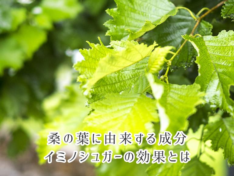 桑の葉に由来する成分・イミノシュガーの効果とは
