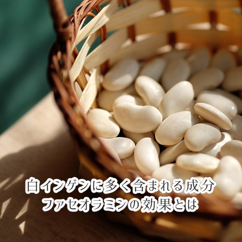 白インゲンに多く含まれる成分・ファセオラミン(ファセオリン)の効果とは