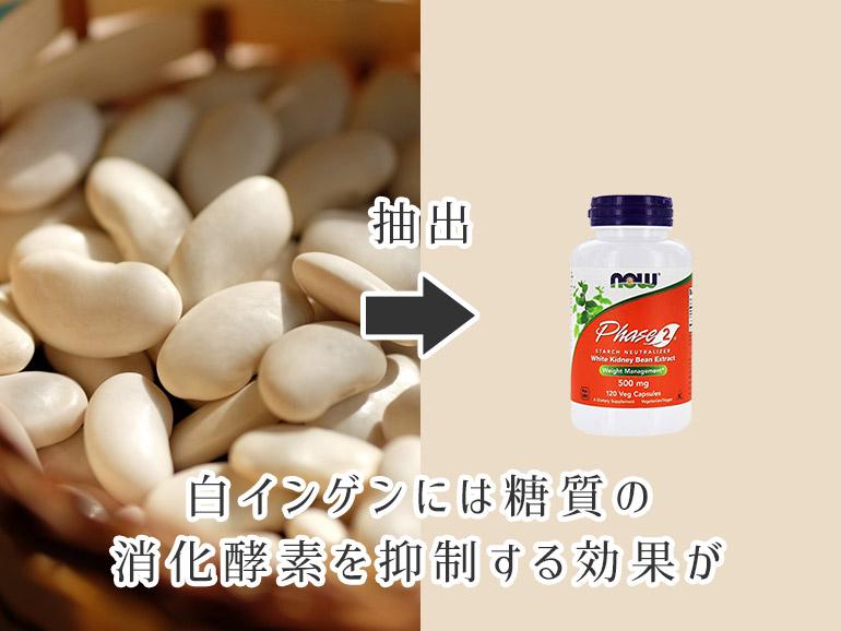白インゲンには糖質の消化酵素を抑制する効果が